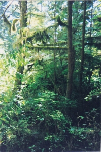 BC Rainforest