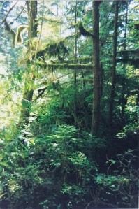 BC Rainforest